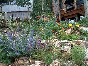 Flower garden in mountains