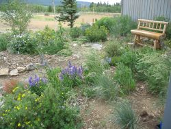Gilpin County Extension High and Dry Demonstration Garden