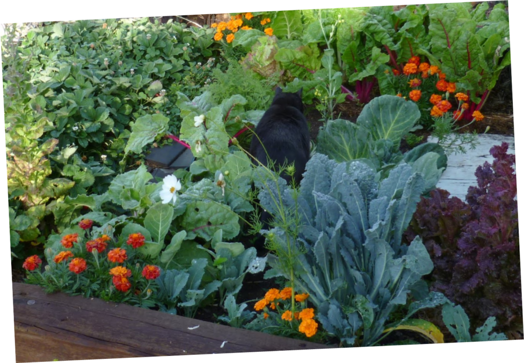Mountain vegetable garden