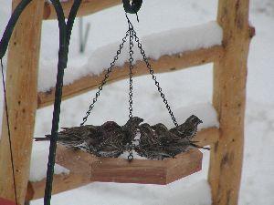 Birds on platform