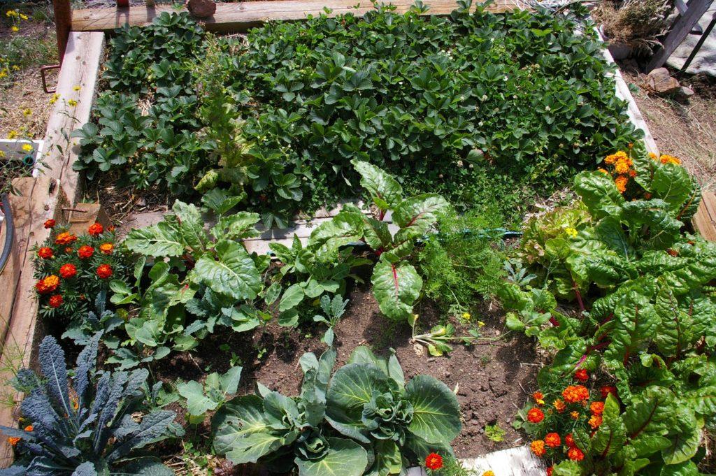 Mountain veg garden from above