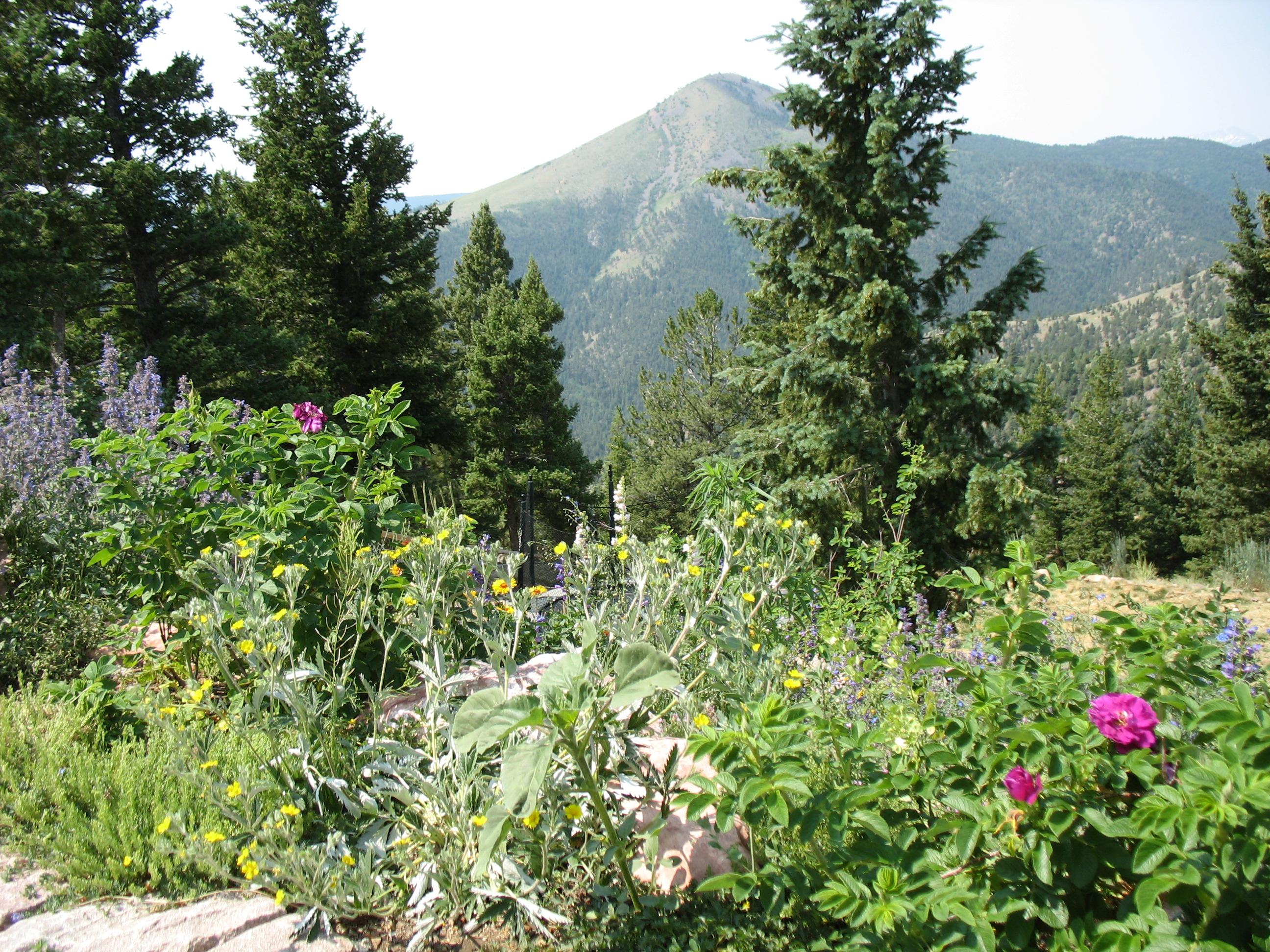 Example of Colorado Landscape